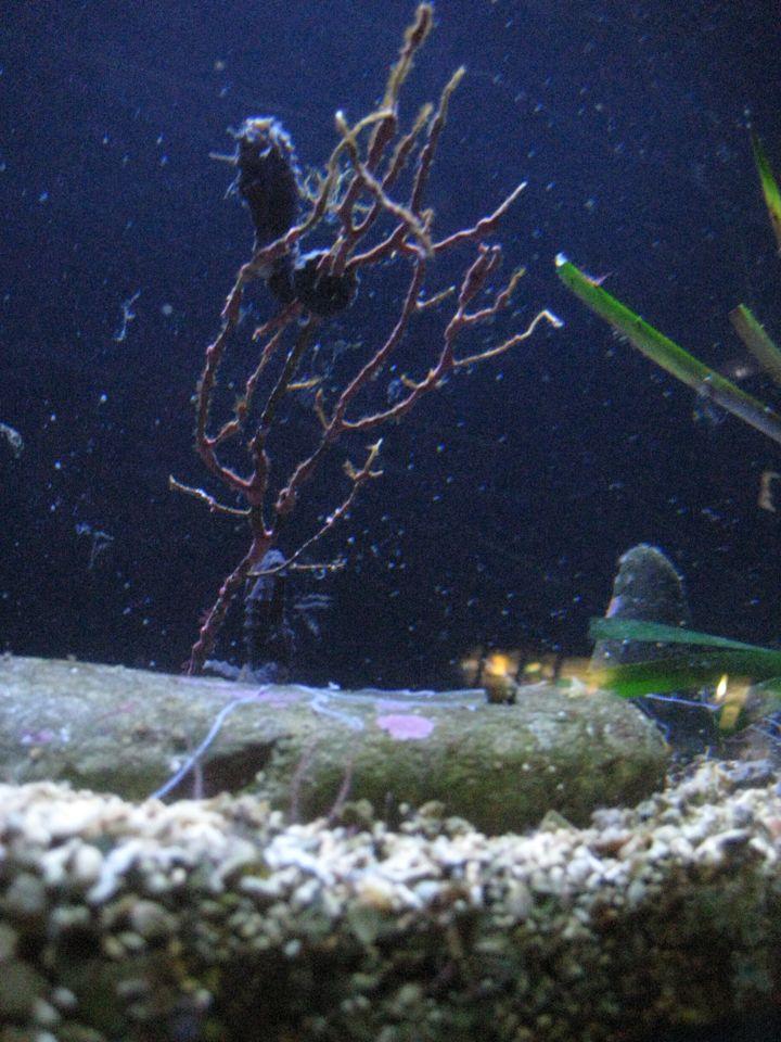 banyuls 3 visite de l aquarium de l observatoire oc 233 anologique abricocotier fr
