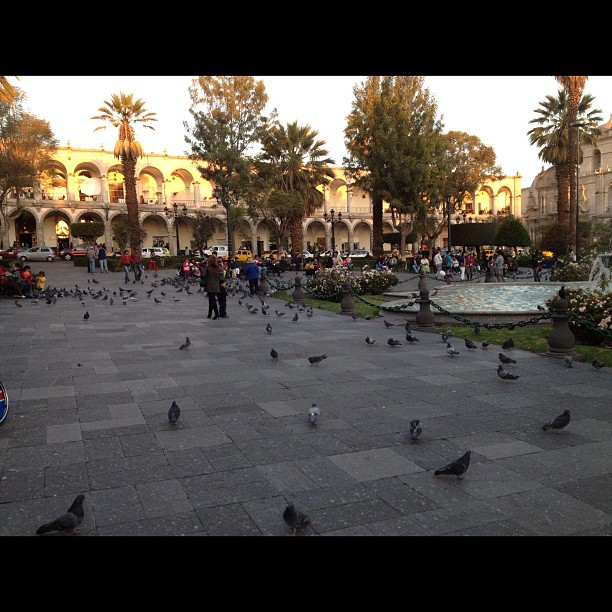 pigeons place arme arequipa