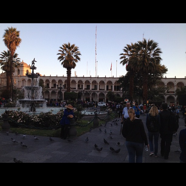 pigeons place d arme arequipa