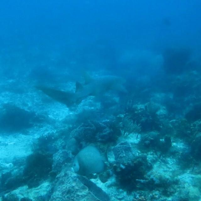Plongee Cozumel