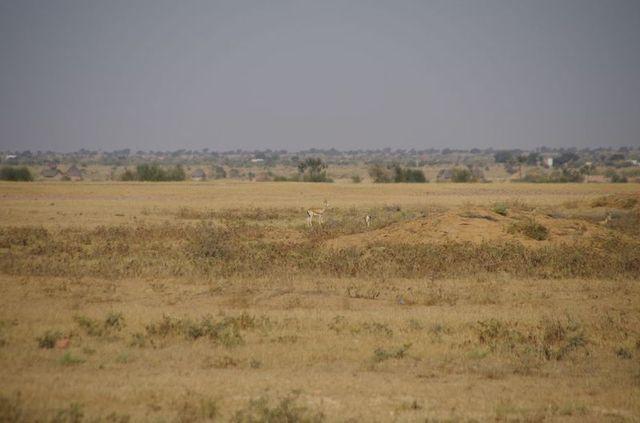 2014-03-09 Inde Jaisalmer