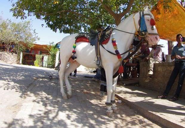 2014-03-15 Inde Chittorgarh Cheval Blanc
