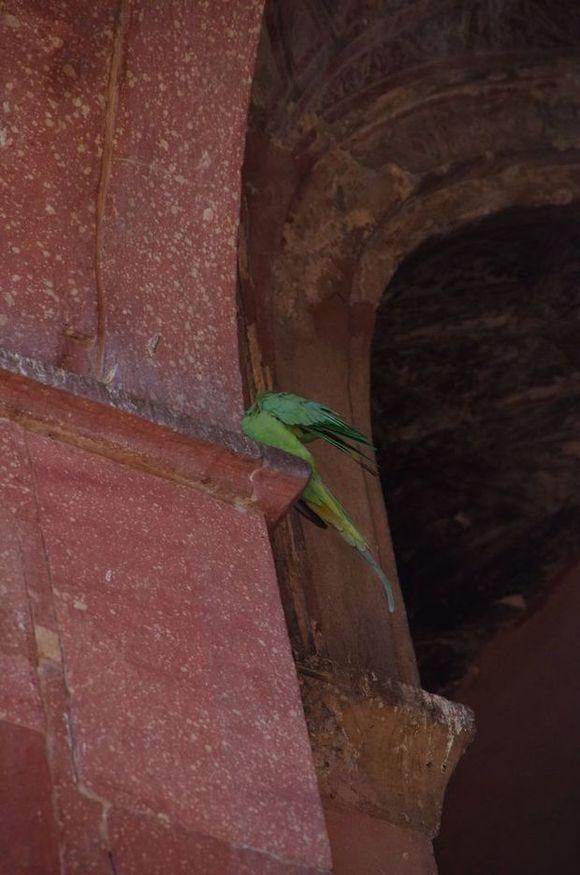 2014-03-20 Inde Agra Baby Taj