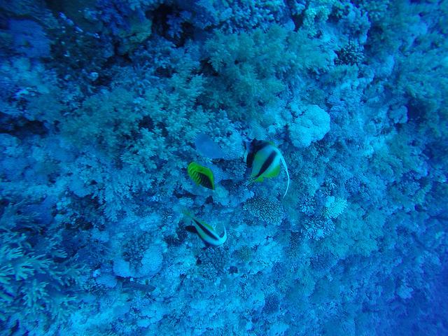 Daedalus Reef Dive