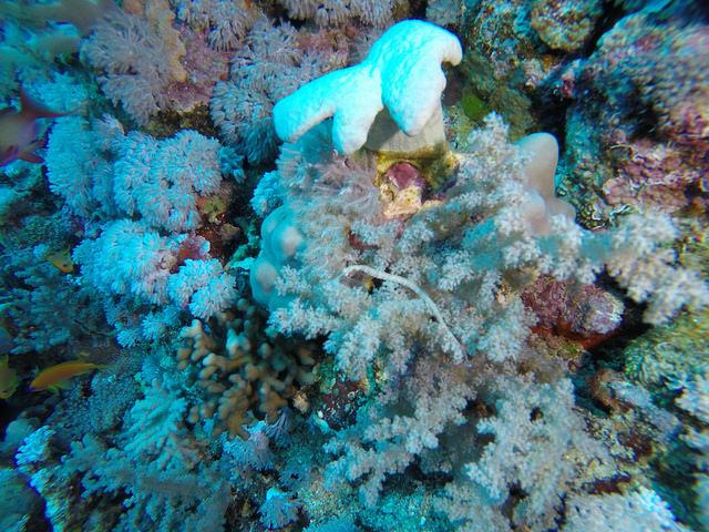 Plongee Egypte Elphinstone