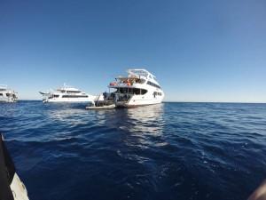Croisières plongée en Egypte : les agences de voyage et les opérateurs