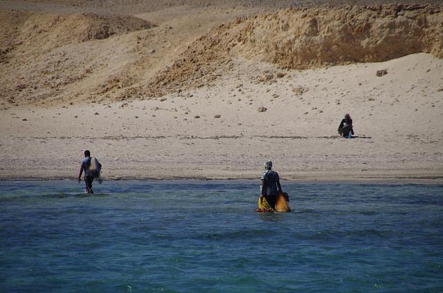 2014-11-02 Egypte Plongee Al Horafi 5