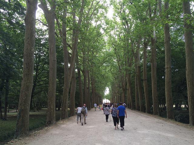 arbres chenonceau