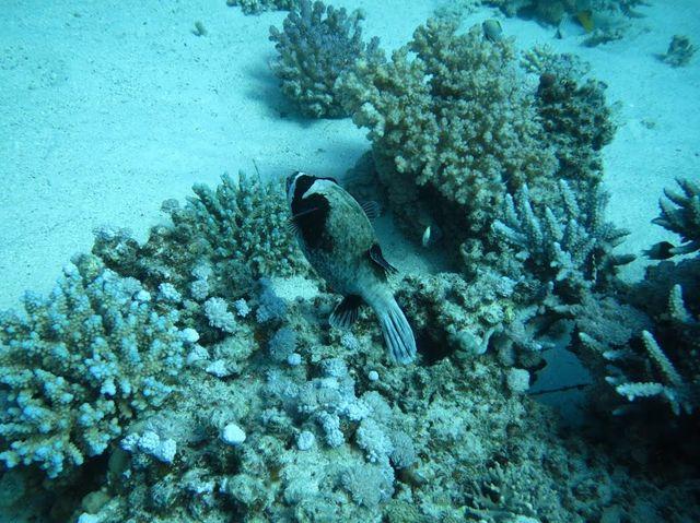 2014-11-06 Egypte Plongee Marsa Shoona Kebir