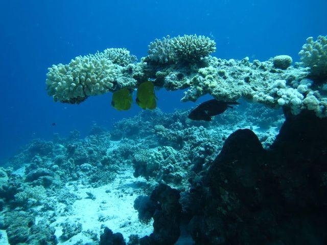 2014-11-07 Egypte Plongee Marsa Shoona Kebir