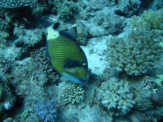 2014-11-09 Egypte Plongee Shaab Marsa Alam 21