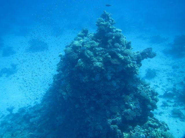 2014-11-09 Egypte Plongee Shaab Marsa Alam 29