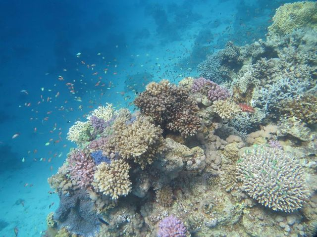 2014-11-09 Egypte Plongee Shaab Marsa Alam 35