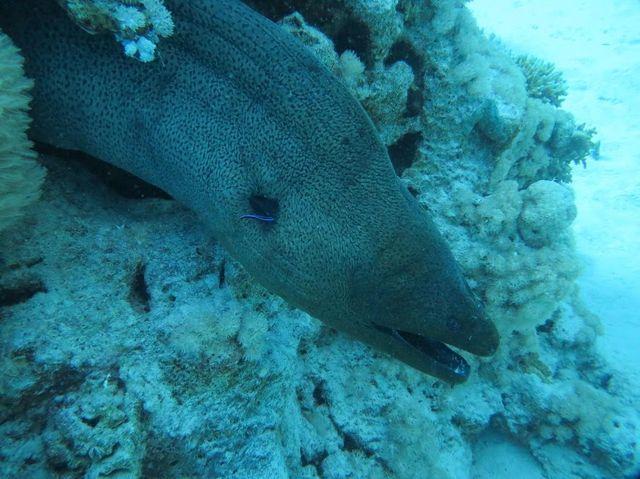2014-11-09 Egypte Plongee Shaab Marsa Alam 54