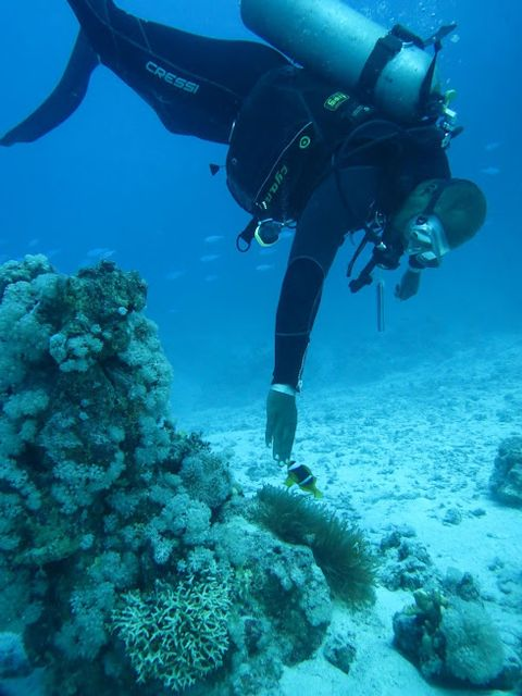 2014-11-09 Egypte Plongee Shaab Marsa Alam 65