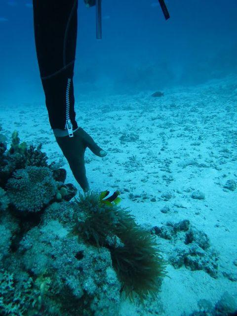 2014-11-09 Egypte Plongee Shaab Marsa Alam 67