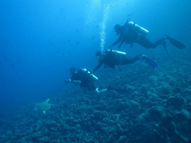 2014-11-10 Egypte Plongee Marsa Murena Tortue verte