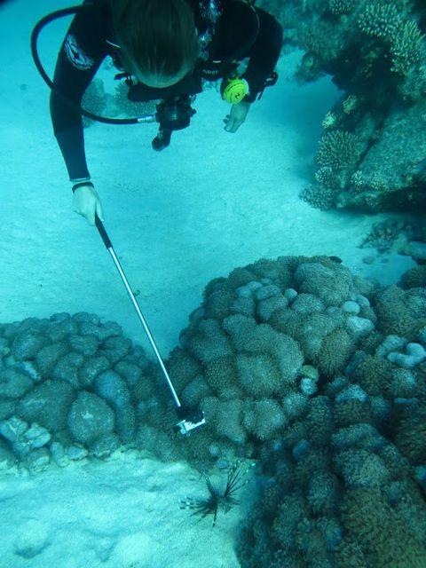 2014-11-10 Egypte Plongee Marsa Murena Rascasse rayonnante