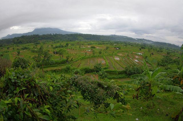 2015-05-02 Bali Agang Rizieres 01