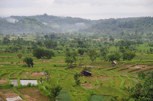 2015-05-02 Bali Agang Rizieres 02