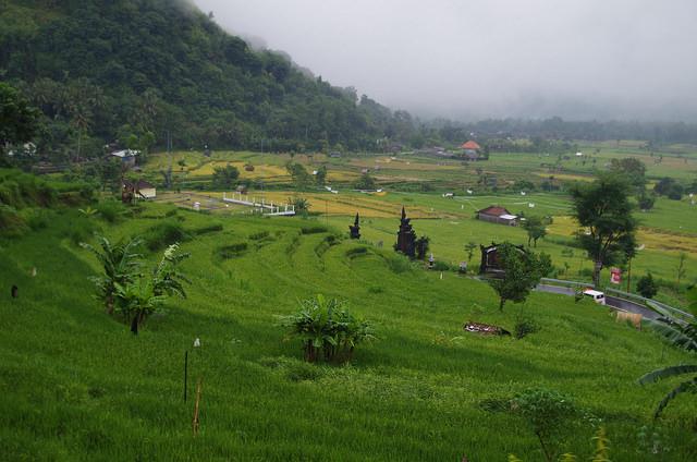 2015-05-02 Bali Agang Rizieres 06