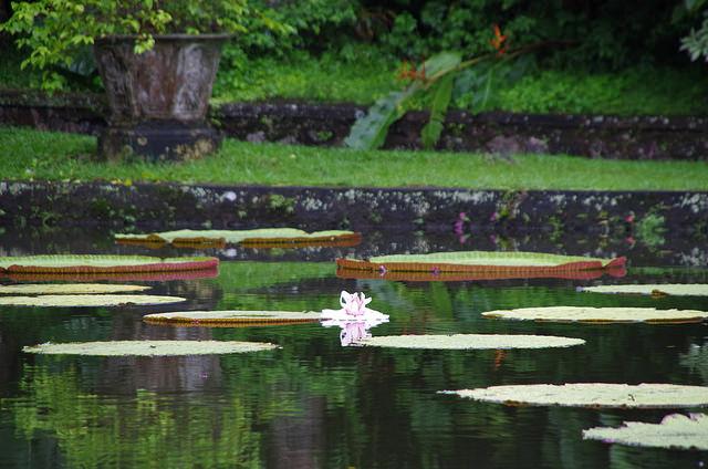 2015-05-02 Bali Tirta Gangga 15