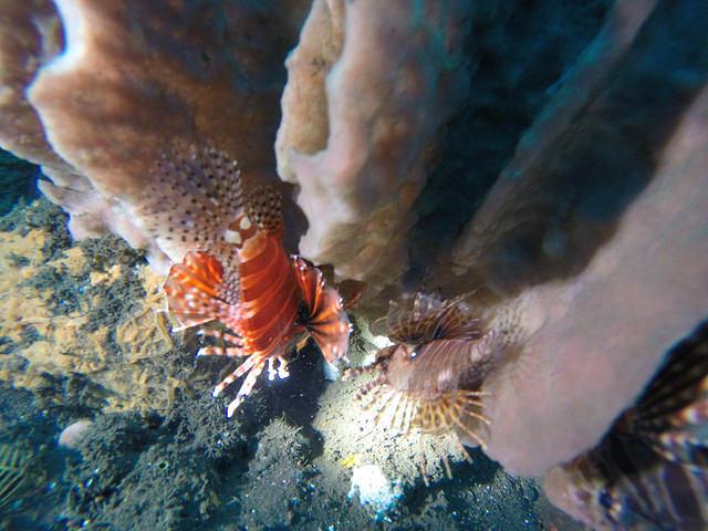 2015-05-03 Bali Plongees Amed Seraya Secret 01