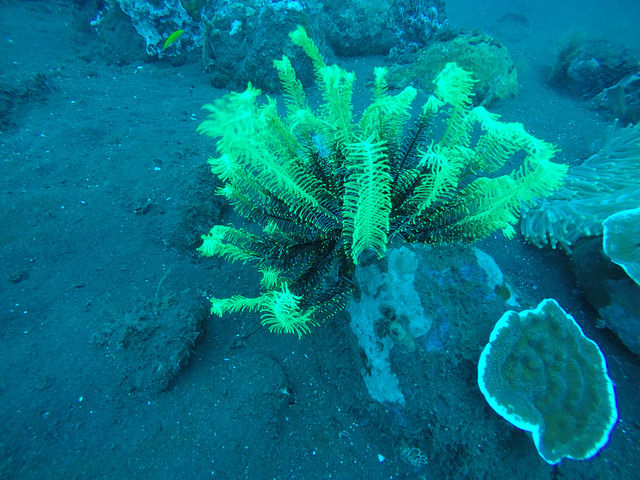 2015-05-03 Bali Plongees Amed Seraya Secret 04