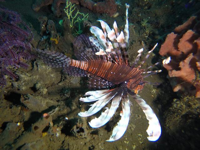 2015-05-03 Bali Plongees Amed Seraya Secret 08