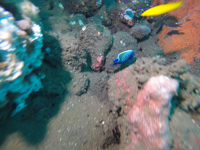 2015-05-03 Bali Plongees Amed Seraya Secret 09