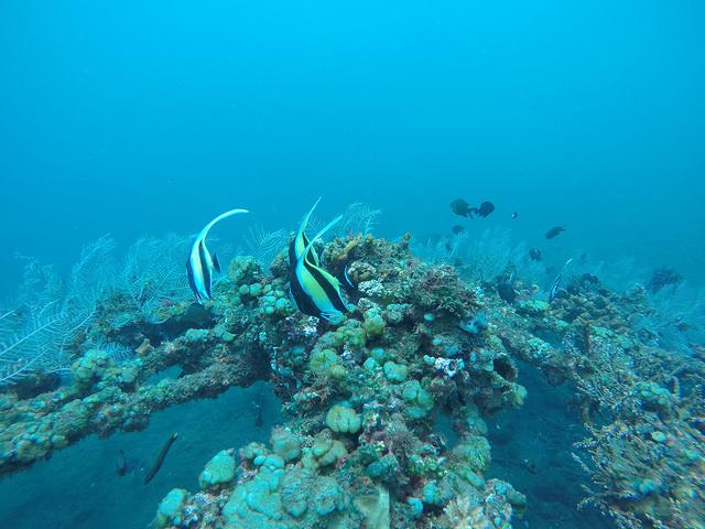 2015-05-03 Bali Plongees Amed Seraya Secret 15