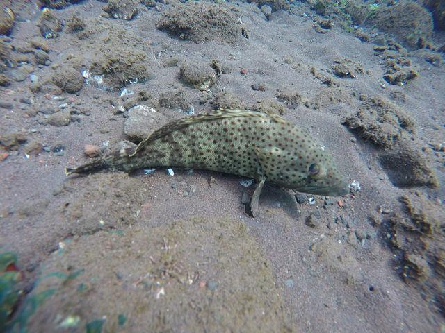 2015-05-03 Bali Plongees Amed Seraya Secret 16