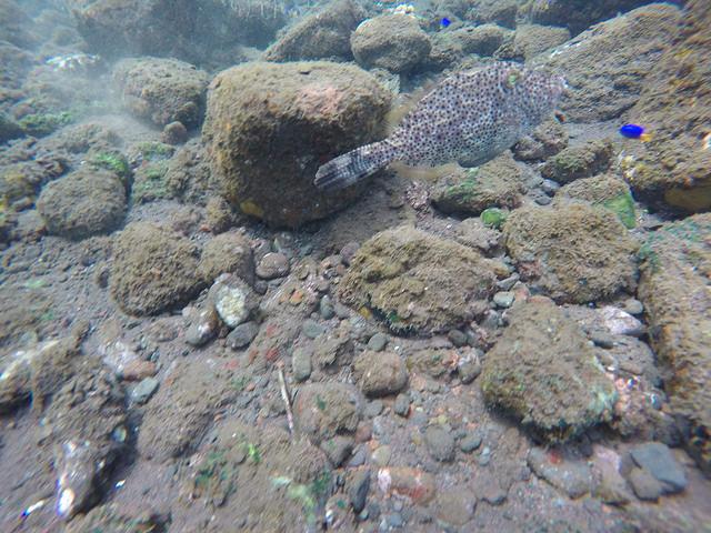 2015-05-03 Bali Plongees Amed Seraya Secret 17
