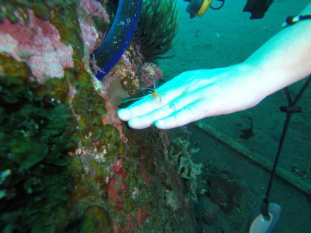 2015-05-03 Bali Plongees Amed Seraya Secret 21