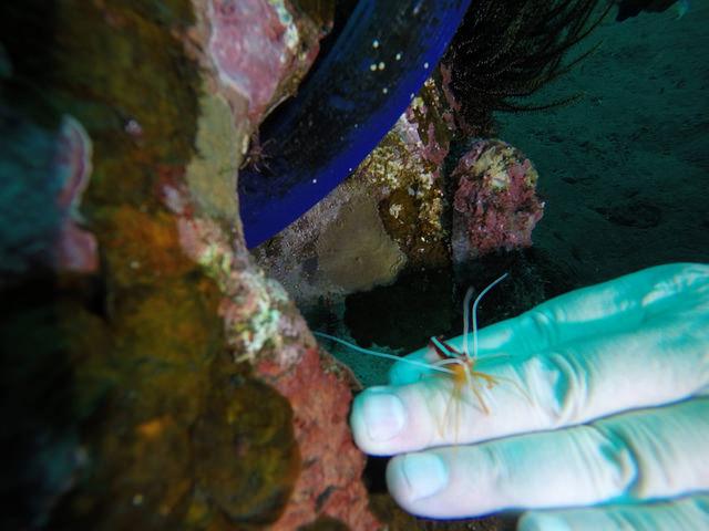 2015-05-03 Bali Plongees Amed Seraya Secret 22
