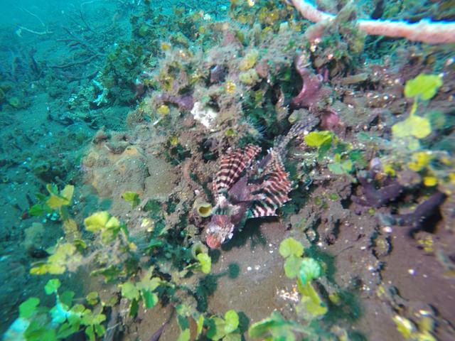 2015-05-03 Bali Plongees Amed Seraya Secret 27