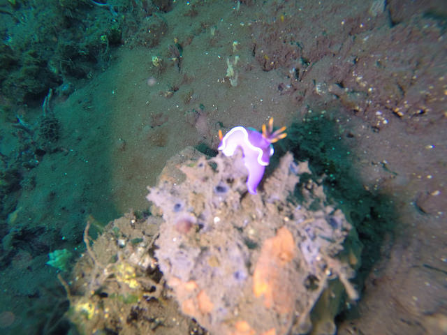 2015-05-03 Bali Plongees Amed Seraya Secret 28
