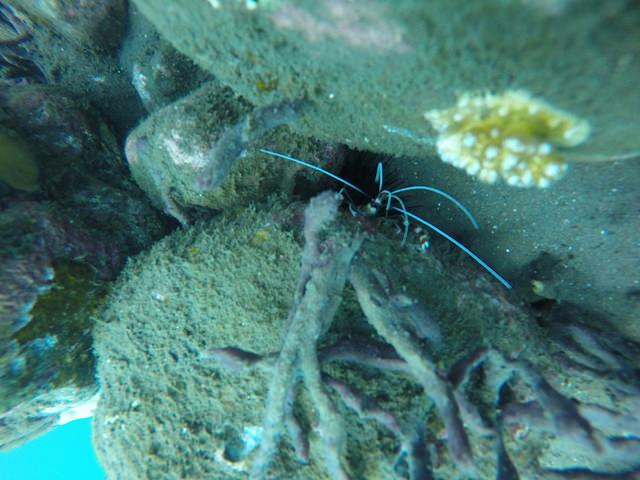 2015-05-03 Bali Plongees Amed Seraya Secret 29