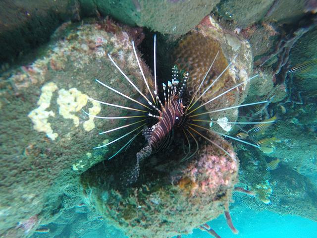 2015-05-03 Bali Plongees Amed Seraya Secret 30