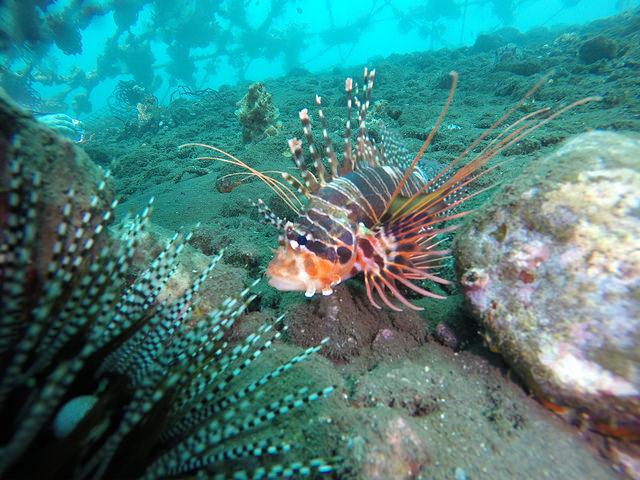 2015-05-03 Bali Plongees Amed Seraya Secret 32
