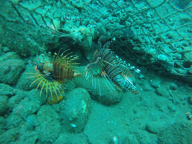 2015-05-03 Bali Plongees Amed Seraya Secret 33