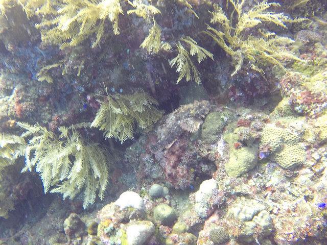 2015-05-04 Bali Plongees Tulamben Drop Off