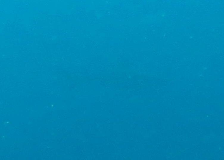 2015-05-04 Bali Plongees Tulamben Drop Off Requin
