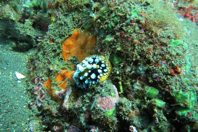 2015-05-04 Bali Plongees Tulamben Temple Coral Garden