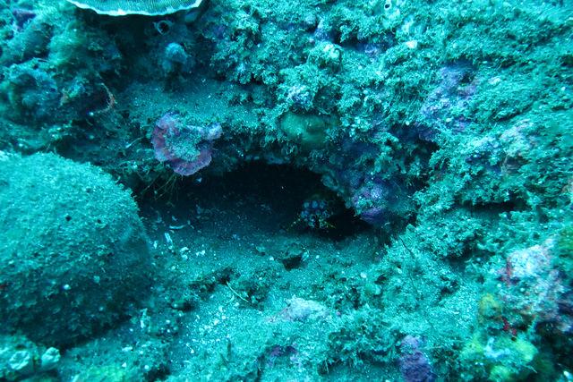 2015-05-06 Bali Plongee Amed Bunutan