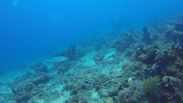 2015-05-06 Bali Plongee Amed Pyramides