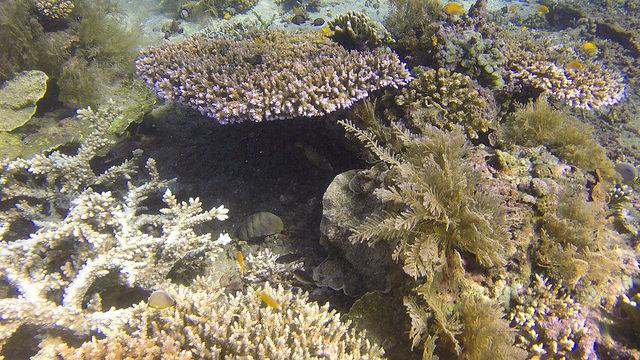 2015-05-07 Bali Plongee Amed Vienna Beach