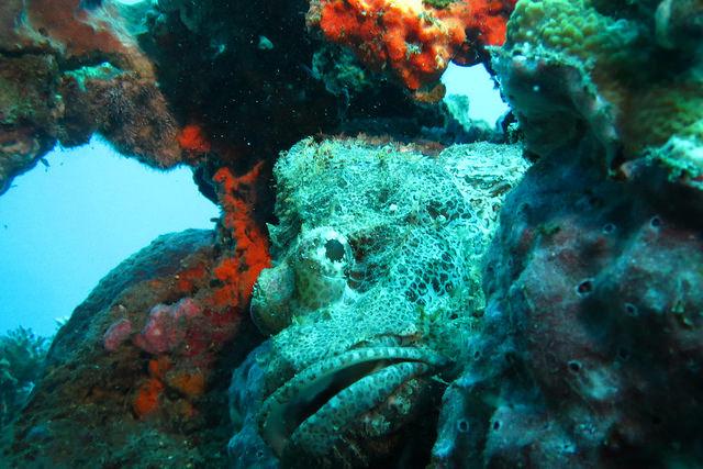2015-05-08 Bali Plongee Amed Jemeluk Bay