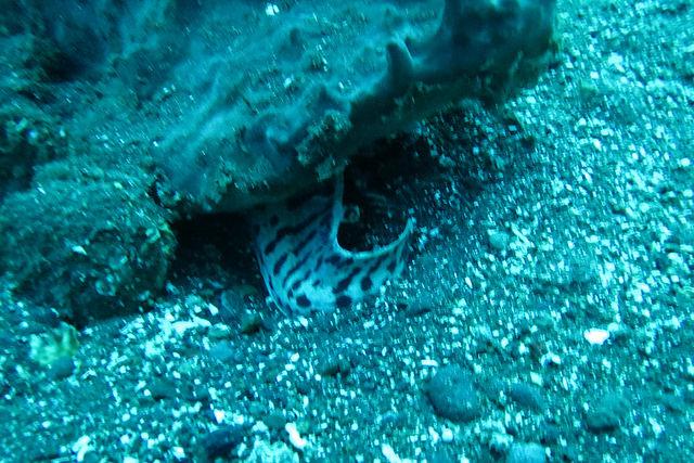 2015-05-08 Bali Plongee Batu Belah