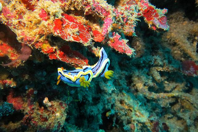 2015-05-09 Bali Nusa Penida Crystal Bay